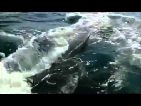 Sri Lanka, A Documentary video