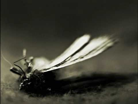 Thumbnail of video L'Altra - Moth In Rain