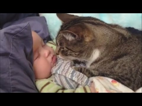 """Cats Love Babies Compilation"" 