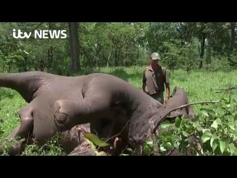 Elephants and villagers battle each other in Malawi