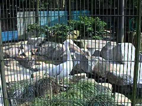 ペリカン 動物園