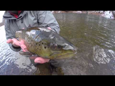 Fly Fishing for Trout and Steelhead on the Oak Orchard River, NY