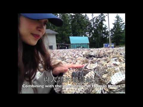蠔在西雅圖!Oyster adventure in Seattle