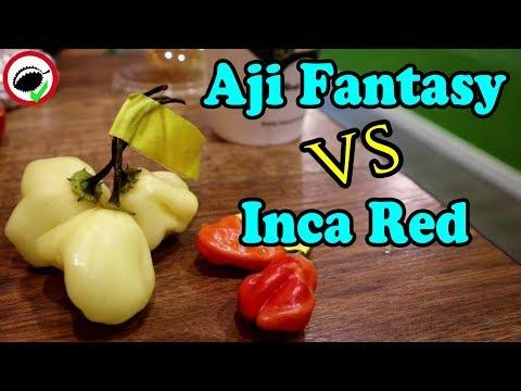 Chili Pepper Reviews! - Aji Fantasy VS Inca Red