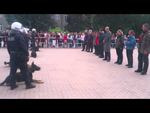 Polizei Hundestaffel Schutzhund Demonstration- police dog unit guard demonstration