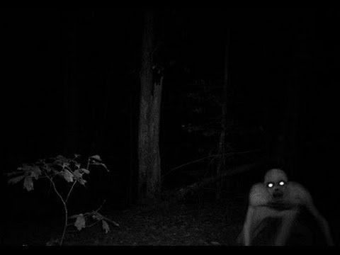 ASSUSTADOR, Aparições de criaturas e vultos no meio do mato
