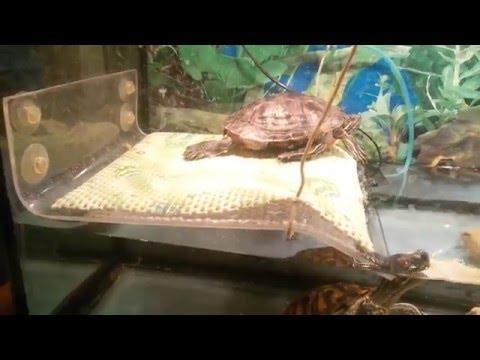 Как можно сделать островок для красноухой черепахи своими руками 203