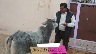 लाख रीप्या की बात। Maga Ram & Om Sharma Short Film । By DD Dadhich
