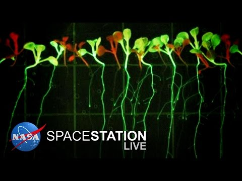 Space Station Live: Cultivating Plant Growth in Space