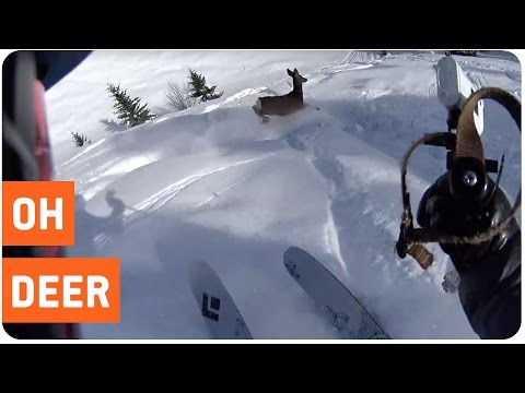 Skier Meets Bambi | Skiing With Nature
