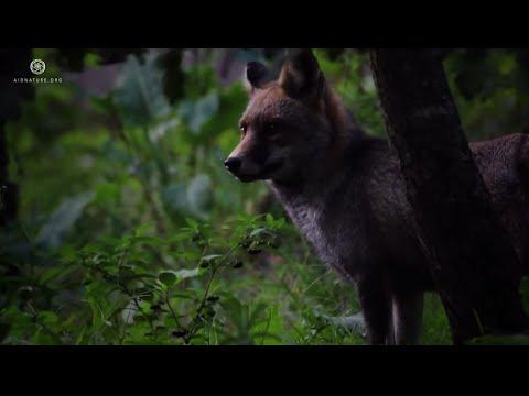 Document�rio: Sintra  - O Monte da Lua HD