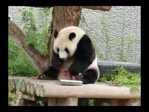 王子動物園のパンダ02