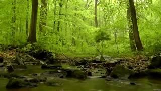 Listen to the Quran SUARAT AL BAQRAH 4 Relax & Beat Insomnia & peace of mind