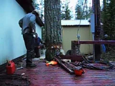 Tree Felling In Close Quarters. video