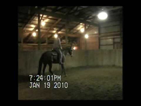 16.1 gelding for sale Video