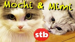 Mochi & Mimi // Mortemer & Egoraptor's Two Buckwild Cats // Cat Grumps with SoloTravelBlog