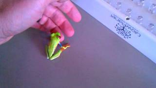 Holding my new red-eyed tree frog