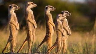 Documentaire animaux La Jungle |  Animal Planet Channel 2015