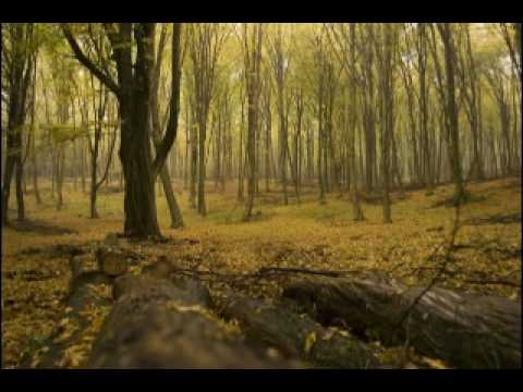 October by Eric Whitacre (string orchestra, high quality audio)