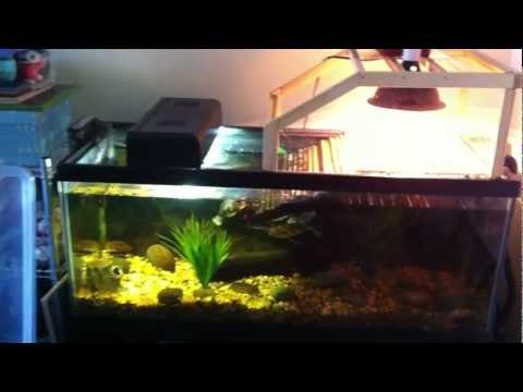 Aquarium setup for two adult aquatic turtles (RES & False Map turtles)