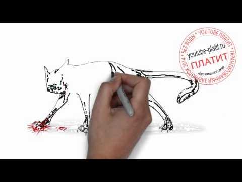 Видео как нарисовать дикую кошку