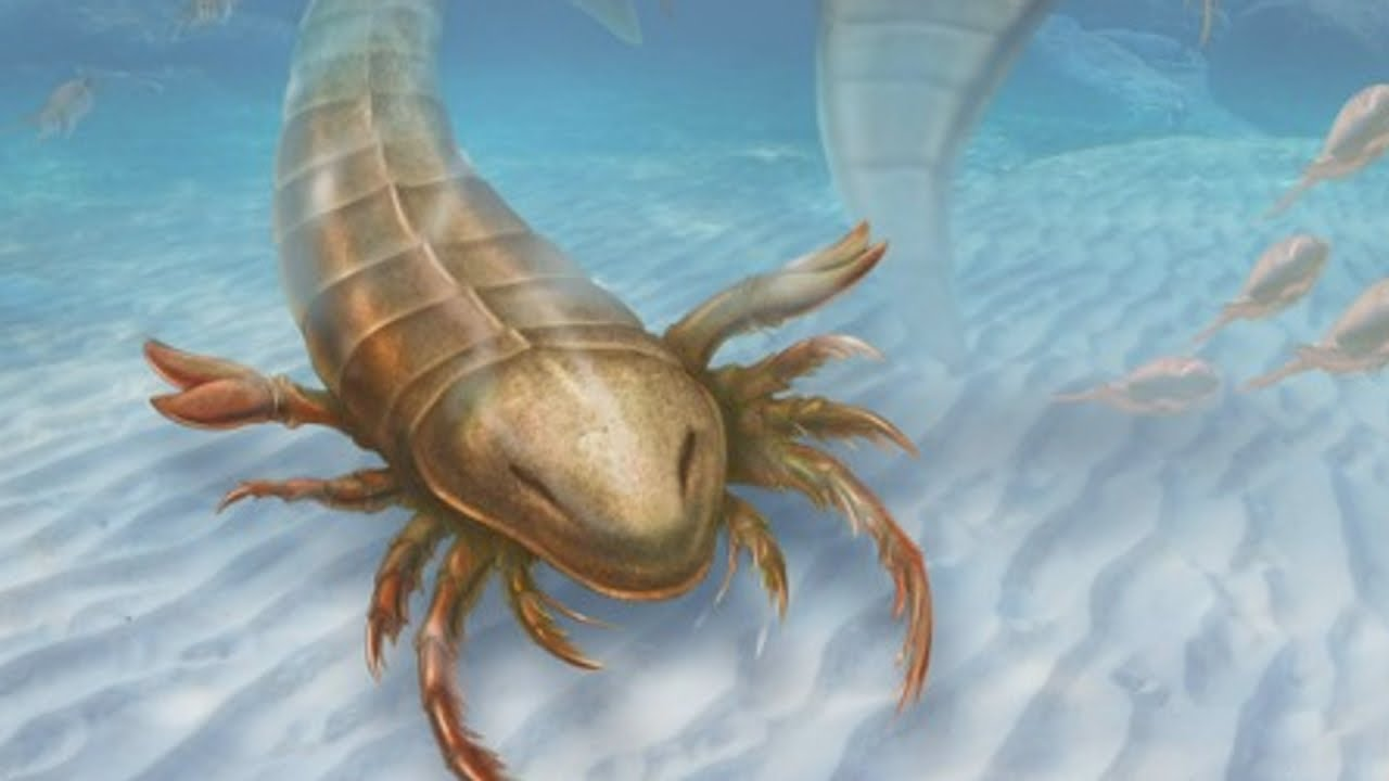 Sea monster: Scientists discover giant ancient sea scorpion