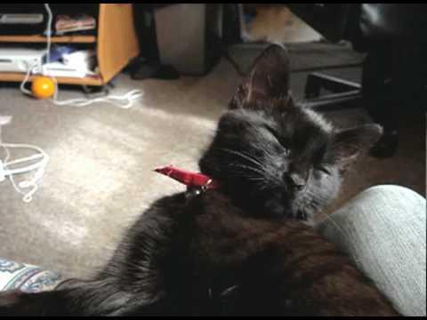 Gatos - Durmiendose y dando cabezazos