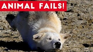 Funniest Animal Fails August 2017 Compilation | Funny Pet Videos