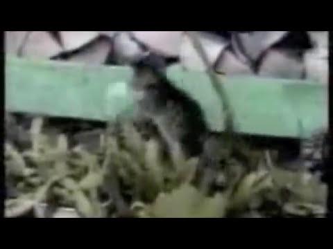 TOP MEJORES VIDEOS DE RISA