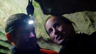 Searching for Japanese Bats - Japan's Northern Wilderness - BBC Earth