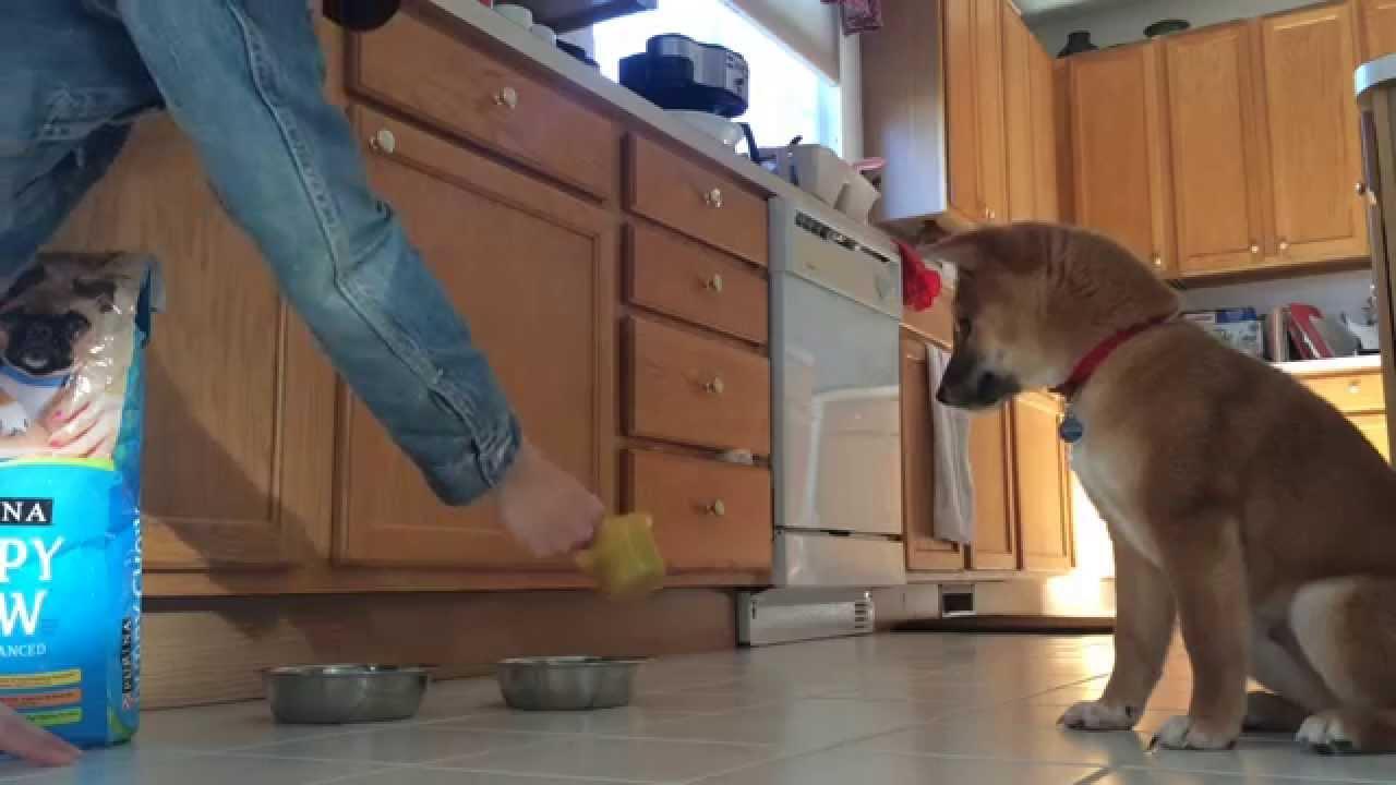 Le chien qui a peur de ses croquettes