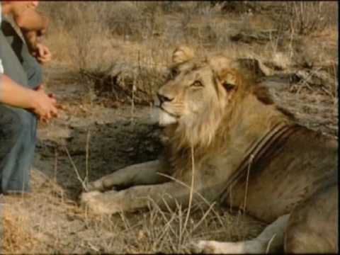 The Official Christian The Lion Video