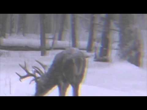 Ohio Trophy Buck Hunt - Winter 194