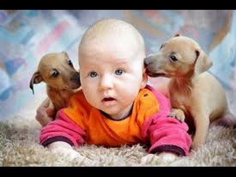 Дети и животные 2 ● Приколы с животными осень 2014 ● Dogs, Cats & Cute Babies Compilation ● Part 2