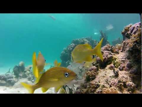 Gopro Snorkeling In Crystal Clear Water Of Turks And Caicos