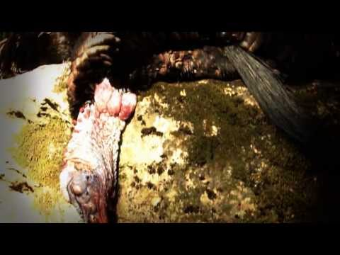 Turkey Hunting Trailer 2013 - NVO