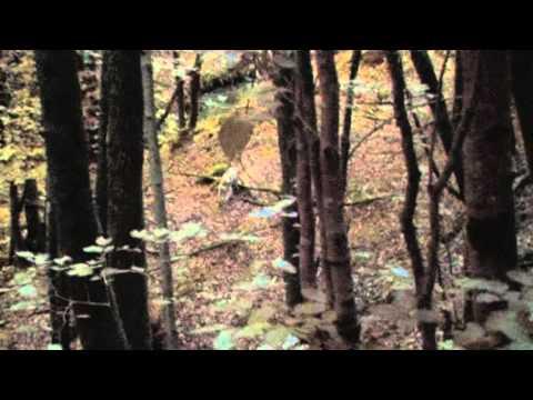 Toby ei boschi di Bellegra – 28 agosto 2010 – seconda parte