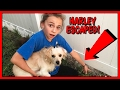 Download WE ALMOST LOST OUR PUPPY! | We Are The Davises in Mp3, Mp4 and 3GP