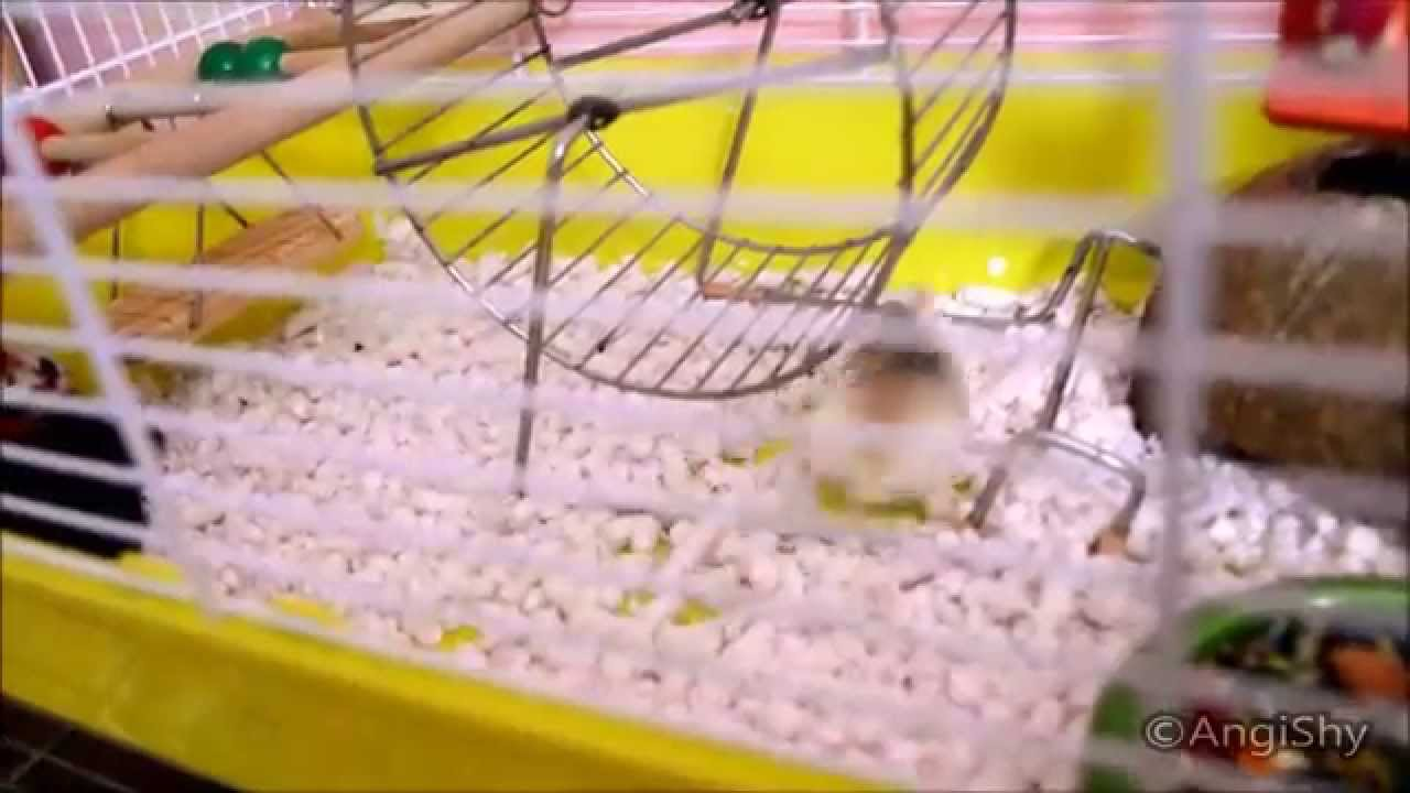 Crazy Hamsters Wheel Crazy Hamster no Clue How to