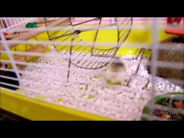 Crazy Hamsters Wheel ▶ Crazy Hamster no Clue How