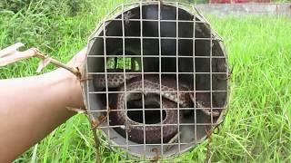 Bẫy Rắn bằng ống nhựa PVC (Snake trap with plastic pipe)