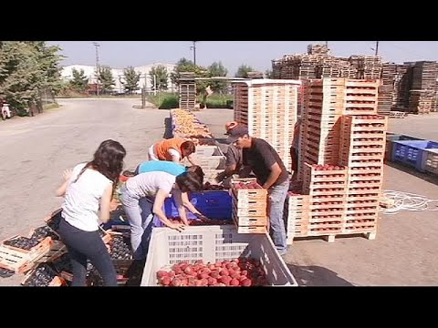 Greek farmers suffer in economic war between Russia and EU