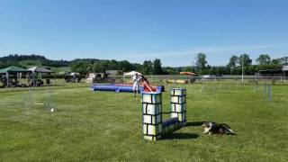 Sheltie Mr. Tiny Agility Turnier Krenglbach