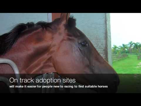 Saving Thoroughbreds from Horse Slaughter