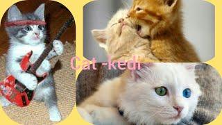 EN KOMİK KEDİ VİDEOSU İZLE- FUNNY CAT VİDEOS-  (CAT VİDEOS ) .KOMİK VİDEO 2018 DOG VİDEO