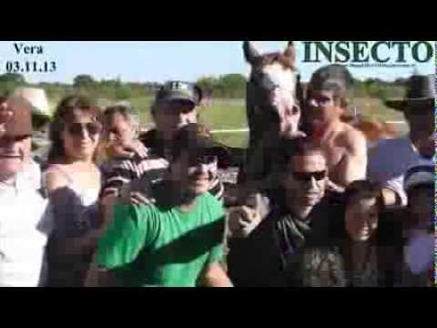 INSECTO-Picante(Vera-03/11/13-Gran Clásico-300Mtrs.)