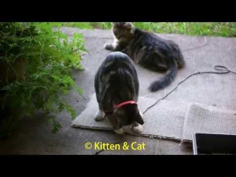Gato jugando con cordón filmado en 4k
