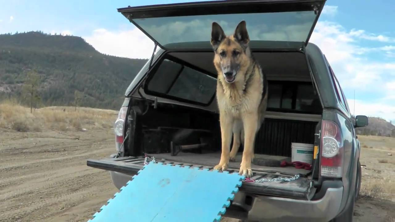 Folding Stairs For Dogs >> Dog Ramp - YouTube