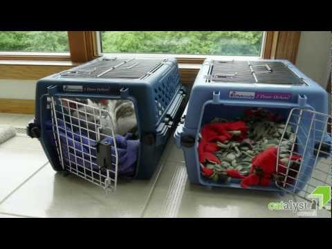 Cats & Carriers: Friends not Foes