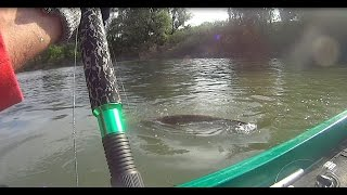 BIG CATFISH IN ACTION CAM - HD by CATFISHING WORLD